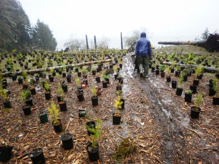 Restoration planting at WDNR Stavis Natural Resource Conservation Area