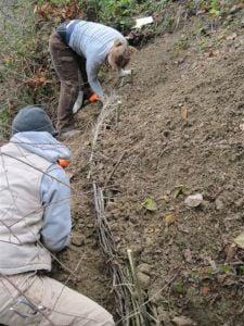 slope planting 007