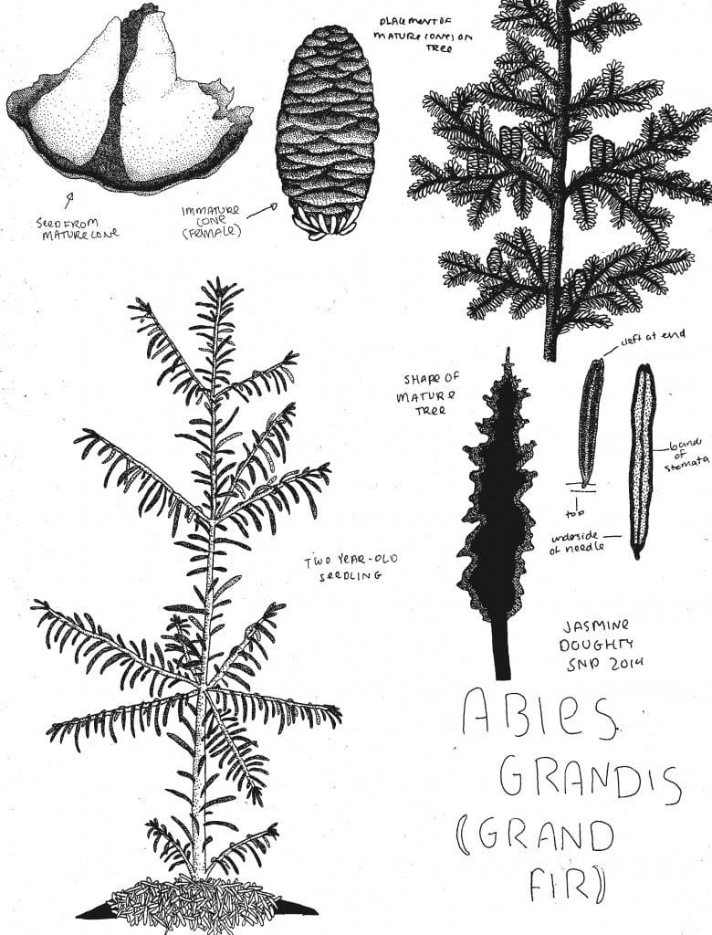 ABGR Drawing 2