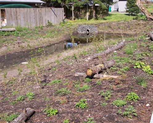 SNP rain garden