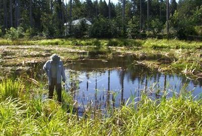 Sound Native Plants wetland monitoring