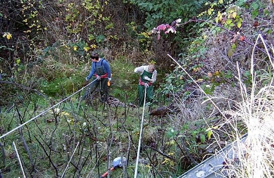 Sound Native Plants slope consulting