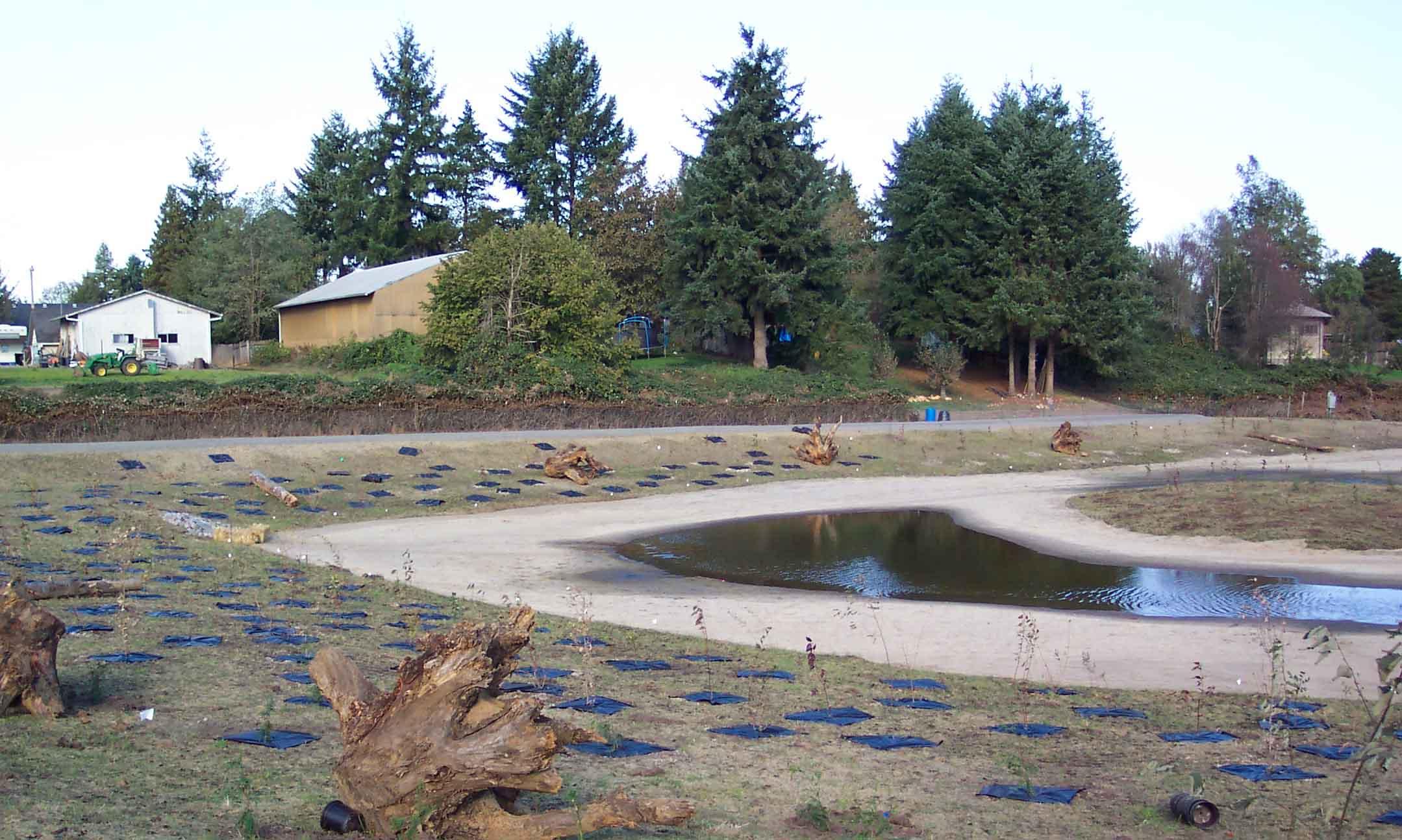 Thomas wetland, Clark County